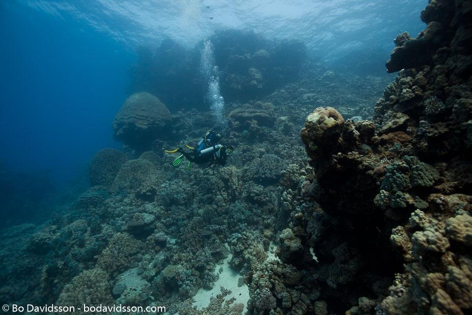 BD-100924-Fury-Shoal-2320-Homo-sapiens.-Linnaeus.-1758-[Diver].jpg